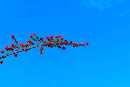 Flower and branches under the blue sky. Stock Photo - 13487974