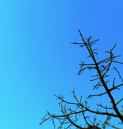 Branches under the blue sky. Stock Photo - 13597621