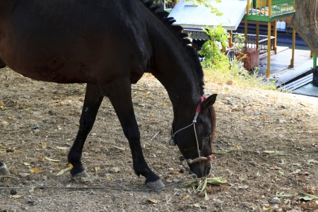 Handsome black horse is under the tree. Stock Photo
