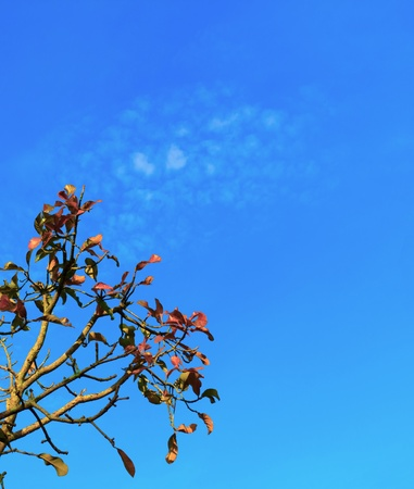 Leaves and branches under the blue sky. Stock Photo - 13652890
