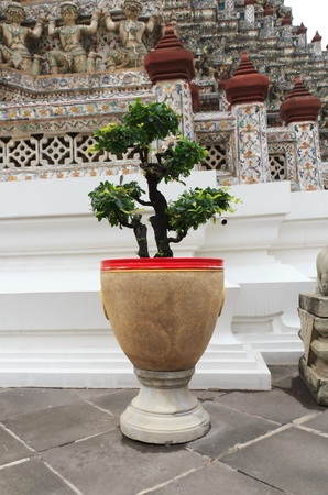 Potted plants and garden decorations in the temple   Stock Photo - 14673828