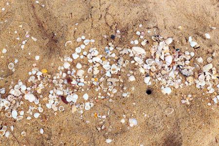 Sea shells with sand closeup as texture  photo