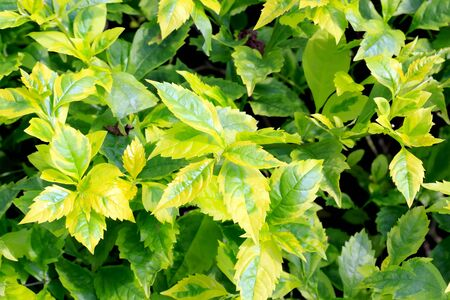 Close-up photos to a group of fresh green leaves