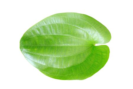 Single green leaf isolated on white background. Stock Photo - 17266119