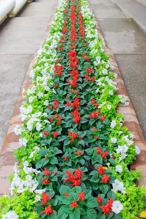 Flowers on to a long line of many colors. photo