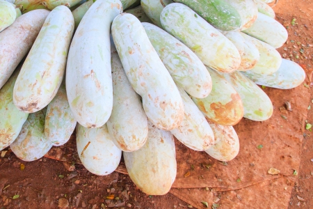 ash gourd: A winter melon fruits stacked for sale.