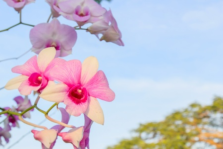 Beautiful orchid fresh flowers on a sky background. photo