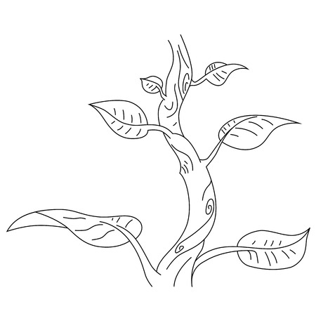 Vector outline of the giant bean plant. Vector