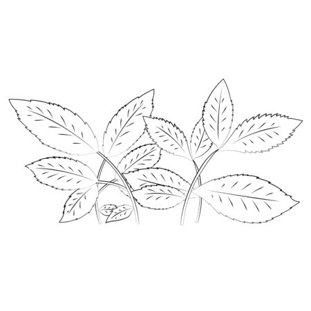 Black outline vector Leaves on white background.