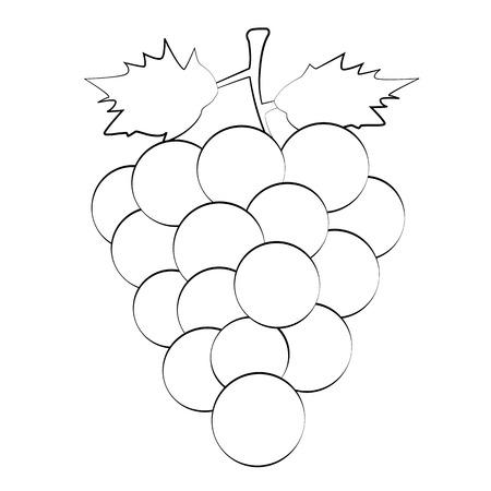 white grape: Black outline vector grape on white background.