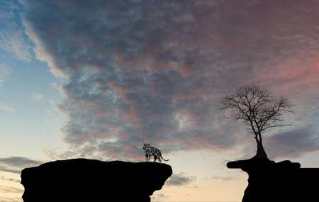stratus: clouds, skies tree shadow Tigers