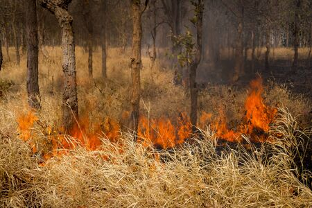 orange inferno: A forest fire creeping along the ground.