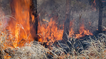 forest fire: Un incendio forestal se arrastra por el suelo. Foto de archivo