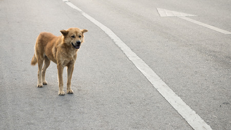 A stray dog standing in the middle of a highway