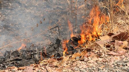 ravaged: A forest fire creeping along the ground.