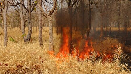 forest fire: A forest fire creeping along the ground.