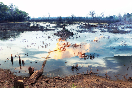deforested: deforested landscape - Ecology and Environment issue Stock Photo