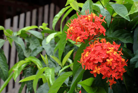 red spike flower is a sacred flower and used in ritual