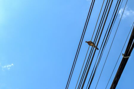 one bird perched on an electrical cable in blue sky background with copy space