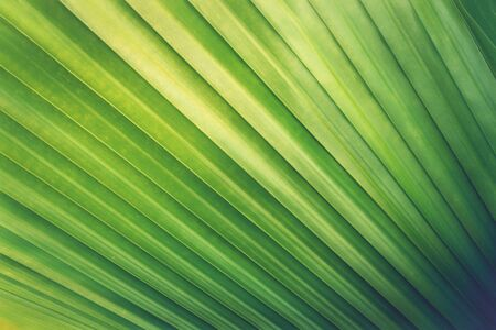 pattern of green tropical leaf texture, fresh green nature stripe background