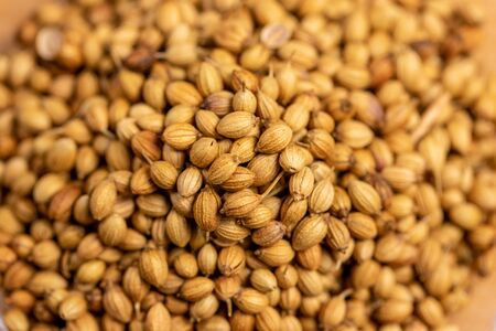 close up of dried coriander seeds, small ball white pale or pale brown with a fragrant aroma used as curry paste Standard-Bild
