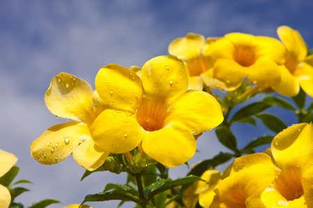 Yellow flower,