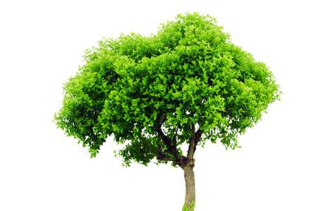 Tree Stock Photo - 10086754