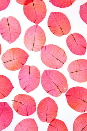 The pink flower petals, red on a white background.