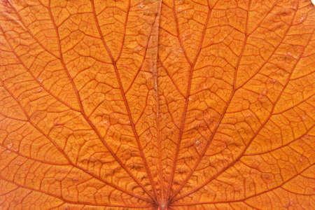 The background color of orange, gold leaf.
