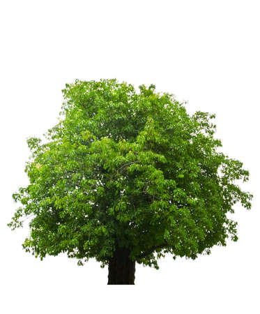 Trees on a white background. photo