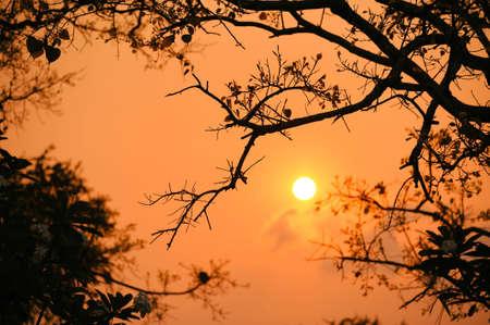 Lever de soleil dans la vue � travers les branches