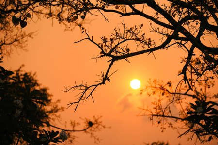 Sunrise In the view through the branches