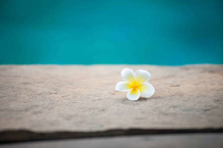 Frangipani flowers fall from the beach. Stock Photo