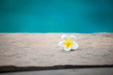 Frangipani flowers fall from the beach. Stock Photo