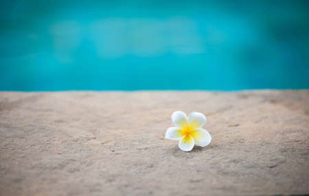 Frangipani flowers fall from the beach. photo