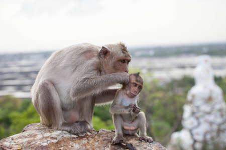 Monkeys sit and eat it  photo