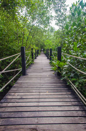 Bridge for the study of natural forest  Stock Photo