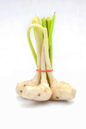 Ginger sprout on a white background  Stock Photo