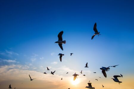 many seagull flying at sunset Stock Photo