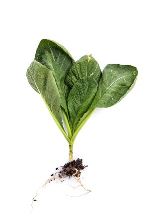 spinach on a white background