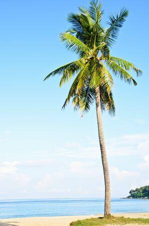 plam on the beach