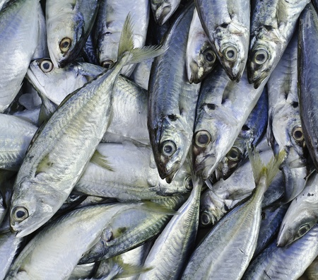 Fresh fish on a fish market in thailand Stock Photo