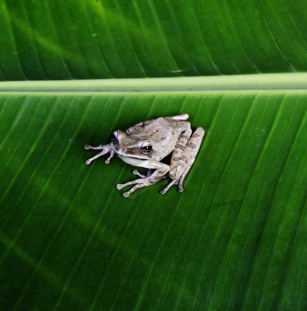 amphibians:  Nature   Details Animals   Reptiles   Amphibians Abstract   Backgrounds Stock Photo