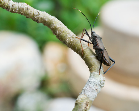 little Insect on the tree