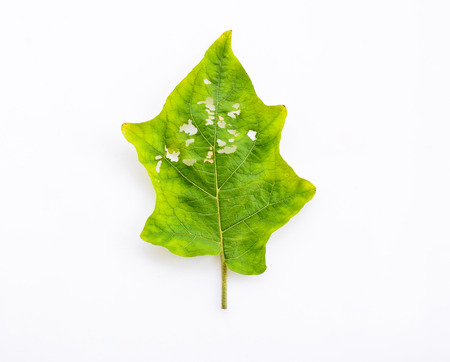 Diseases and insect pests of leaves on white background