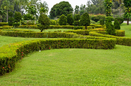 Peaceful Green Garden with a Freshly Mown Grass Lawn