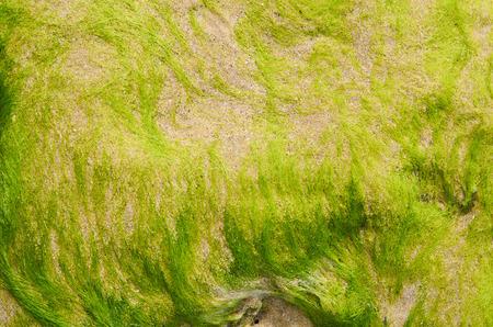 Close up  Algae on the beach