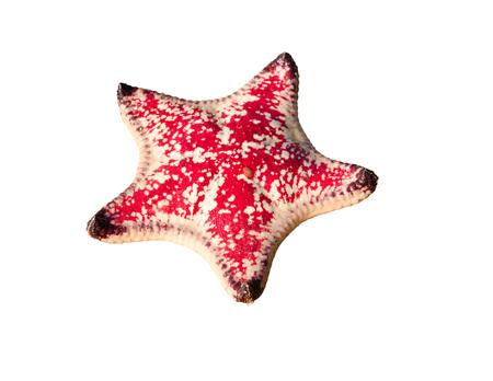 red  Starfish on white background Stock Photo