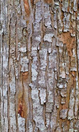Highly detailed tree bark texture Stock Photo