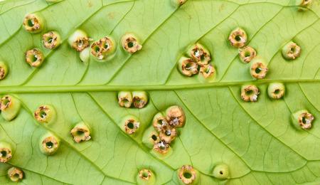 disease on the tree leaf
